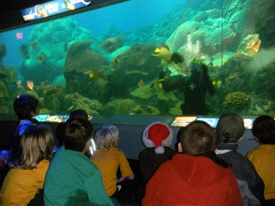 Texas State Aquarium : there's a guy feeding fish in the tank