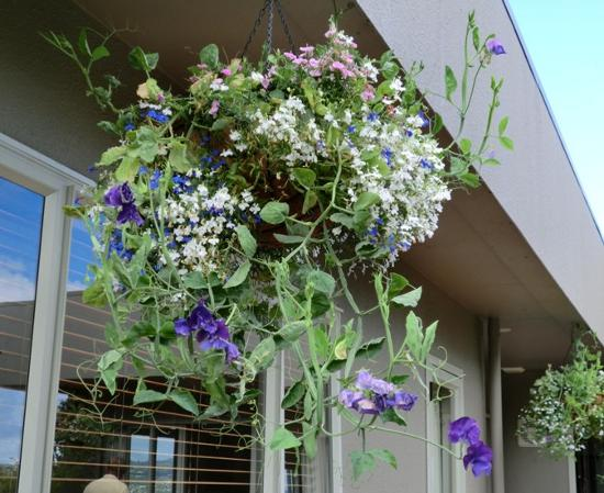 Above the Lake at Windsor Charters : Fabulous hanging baskets