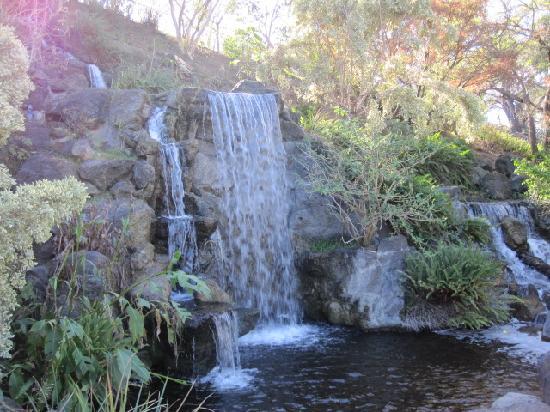 Los Angeles County Arboretum U0026 Botanic Garden: Meyberg Waterfall