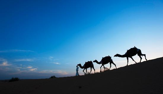 Al Maha, A Luxury Collection Desert Resort & Spa: Camel Ride
