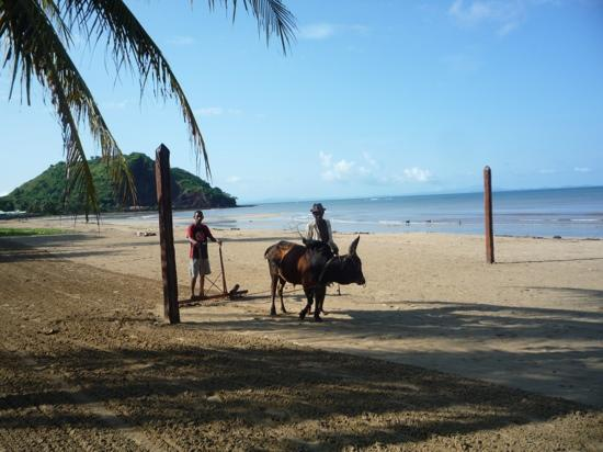 Domaine Manga Be : beach cleaning at nosey be