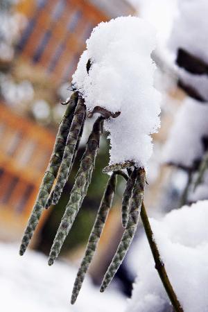 Belmond Le Manoir aux Quat'Saisons: Winter morning