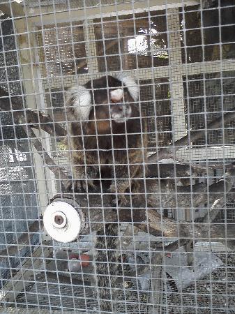 Big Cat Habitat and Gulf Coast Sanctuary: monkey
