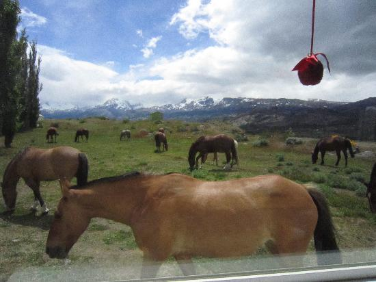 Estancia Cristina Lodge: view from the restaurant's window