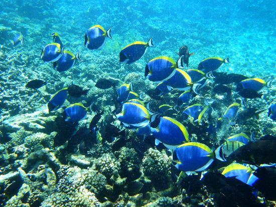 Anse Lazio : Unterwasserwelt an der Ile Cocos