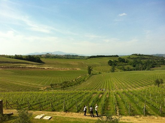 Terricciola, Itálie: Vineyards in front of the winery of our wine tasting tours
