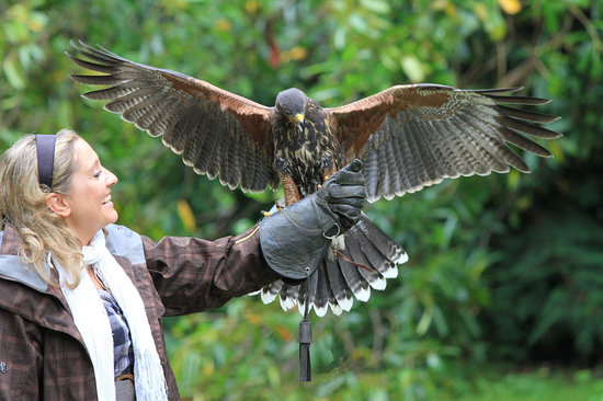 Cong, Irlanda: Your chance to fly hawks in a private one hour Hawk Walk in the beautiful grounds of Ashford Cas