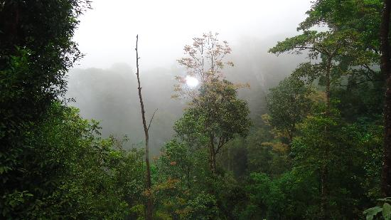 Blue Ginger Spa Resorts Wayanad: View from the window