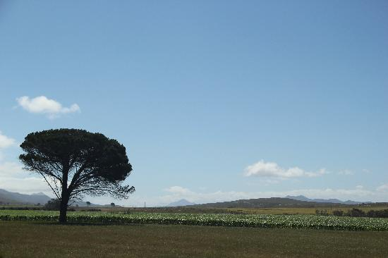 Cape Town Central, Afrika Selatan: Driving through the Overberg