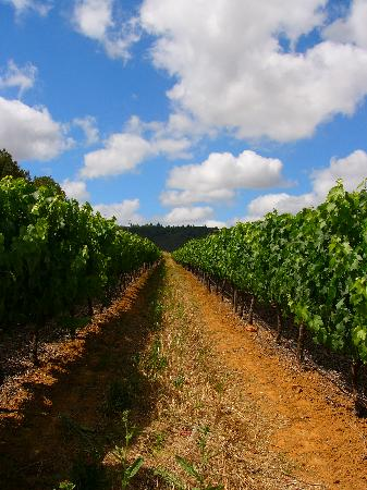 Knorhoek Vineyards