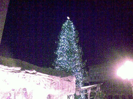 Hotel Il Catturanino: l'albero di fronte l'albergo