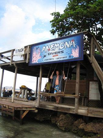 Anemona Divers Photo