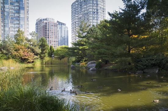 Mississauga, Canada: Kariya Park pond