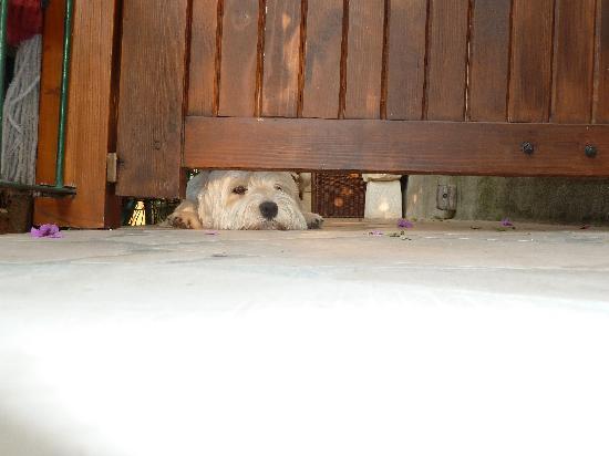 Villa Kamenica: Duje the guard dog