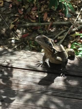 Byron Lakeside Apartments: lizards on veranda - hard to shoo away