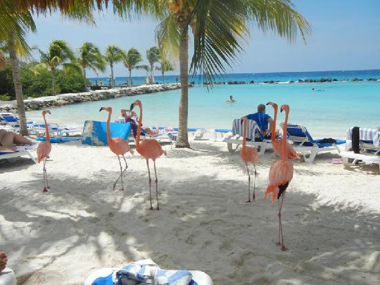 Renaissance Aruba Resort Flamingos