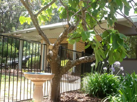 Margaret House: Fully fenced properties with great bird life