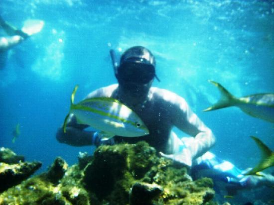 Paradise Island & The Mangroves (Cayo Arena): Paradise Island