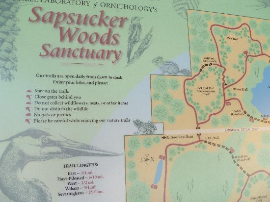 Cornell Lab of Ornithology: map of Sapsucker Woods