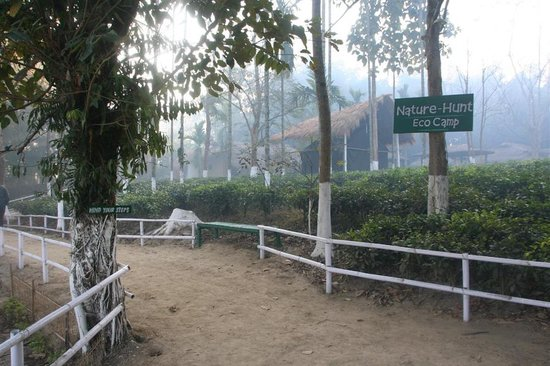 Nature Hunt Eco Camp, Kaziranga National Park: Entrance
