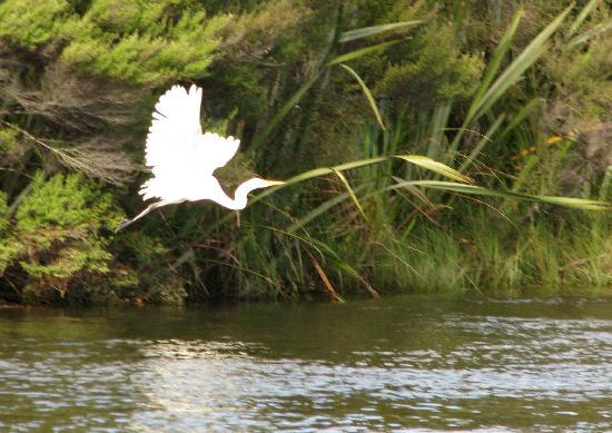 Okarito, New Zealand: Birdlife all around us.