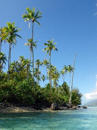 Villa Corallina Moorea : Peaceful palms