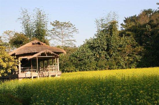 Majuli, India: picturesque mustard field