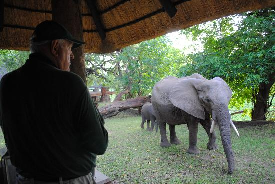 Mfuwe Lodge - The Bushcamp Company : elephants joined us for breakfast at the lodge reception