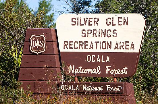 Sleep Inn & Suites Ocala - Belleview: Silver Glen Springs - One of Ocala National Forest's hidden gems!