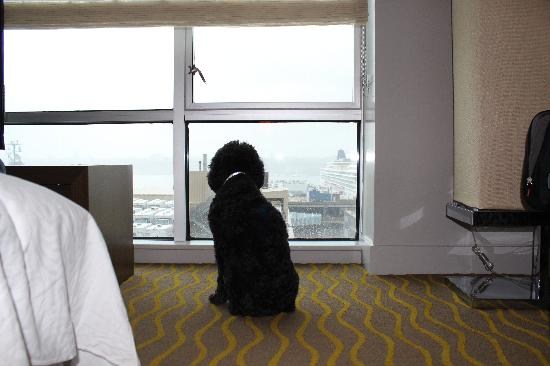Ink48 - a Kimpton Hotel: Shiloh enjoying the Hudson River view at Ink48