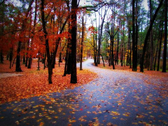 Huntsville, Teksas: Enjoy fall colors in Texas all through December! Awesome!