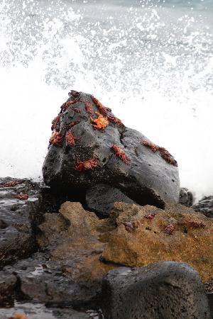 Las Grietas : Red Crabs on Dog Beach