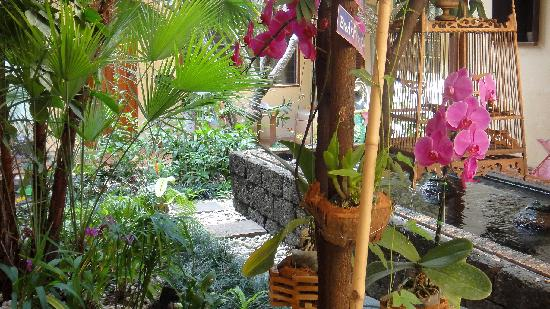 Cool Guesthouse: Garden view with a beautiful orchid