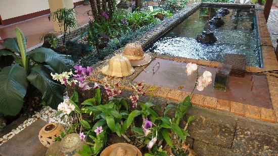 ‪‪Cool Guesthouse‬: Pond with multicolored fish, turtle and Koi carp, at first plan orchids‬