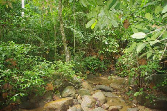 Kathu Waterfall : Natur pur