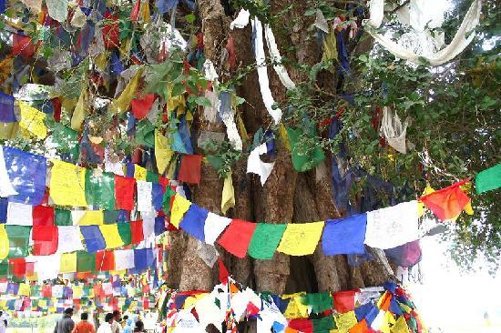 Maya-Devi-Tempel: Prayer Flags
