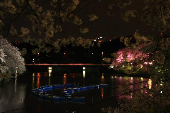 Chidorigafuchi: 幻想的な夜桜