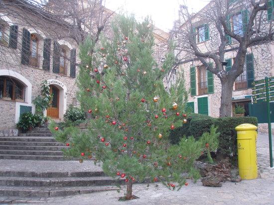 Cappuccino Valldemossa : Christmas tree opposite Cappuccinos Valldemossa