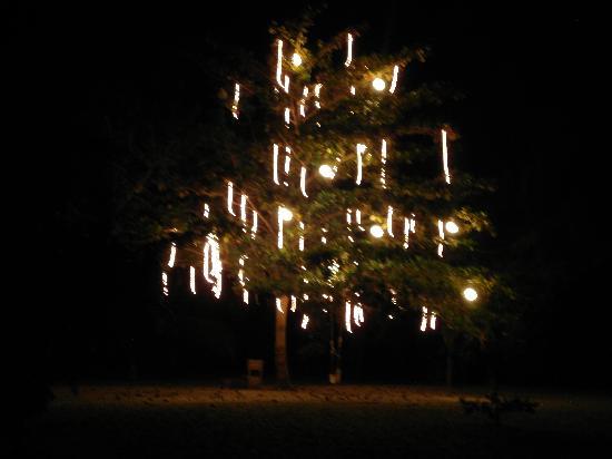 Merecumbe Hotel : El árbol más lindo que he visto