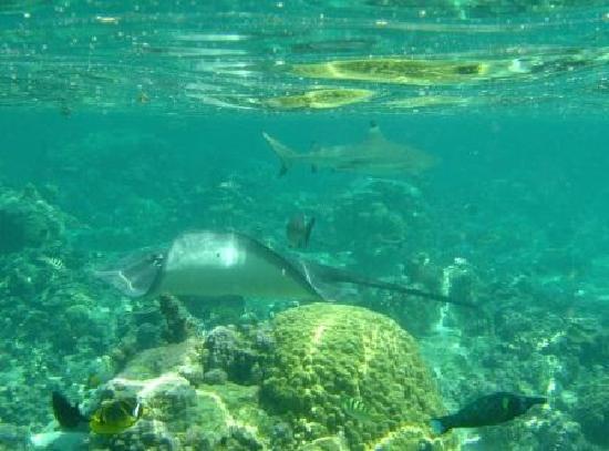 Lagoonarium: Shark and Ray