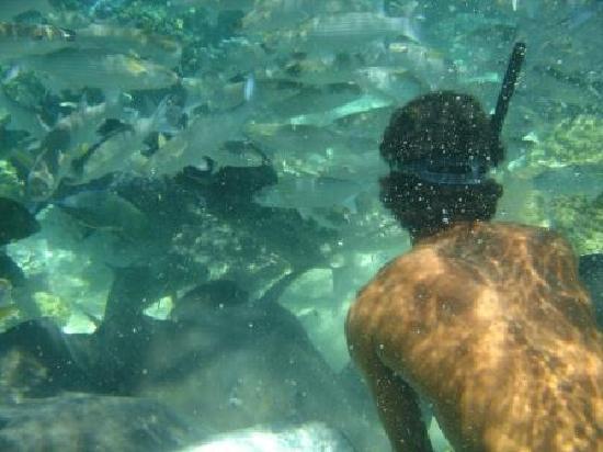 Lagoonarium: Wilfred feeding fish