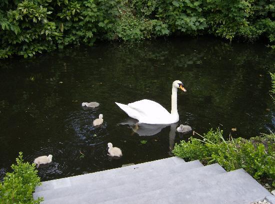 Bed & Breakfast Speelmansrei: SWANS garden/canal