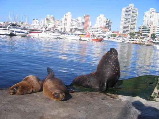 Cultura Cercana - Uruguay