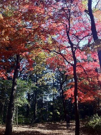 Shakujii Park: 秋の野鳥の森公園(石神井公園)