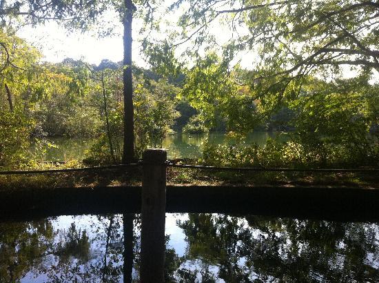 Shakujii Park: 三宝寺池のベンチからの眺め