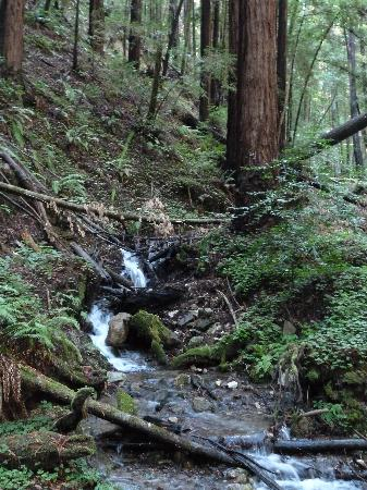 Henry Cowell Redwoods State Park: Fall Creek Tributary