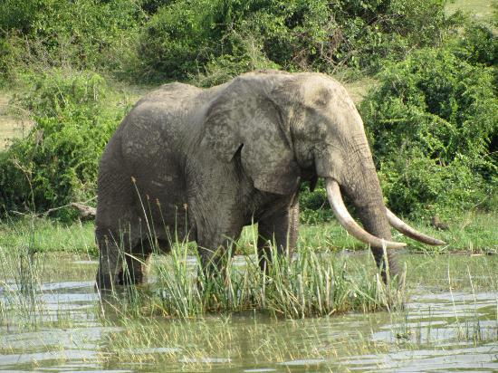 Mweya Safari Lodge: canal de kazinga