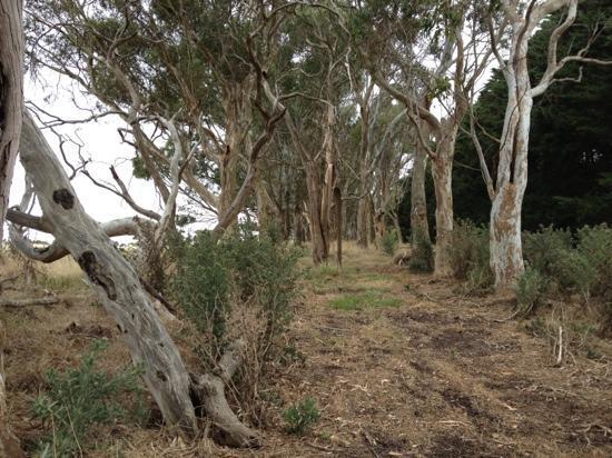 Quamby Homestead: The Walk