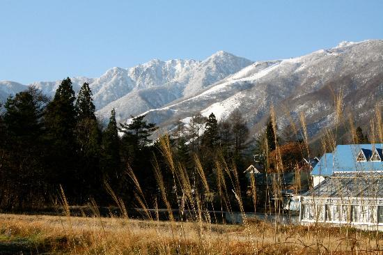 Elk at Hakuba: View from the Blue Dragon