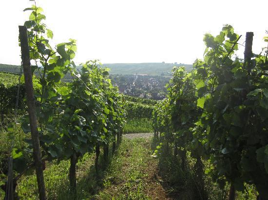 Hotel Restaurant Engel: A view of Pfaffenweiller village from the vineyards